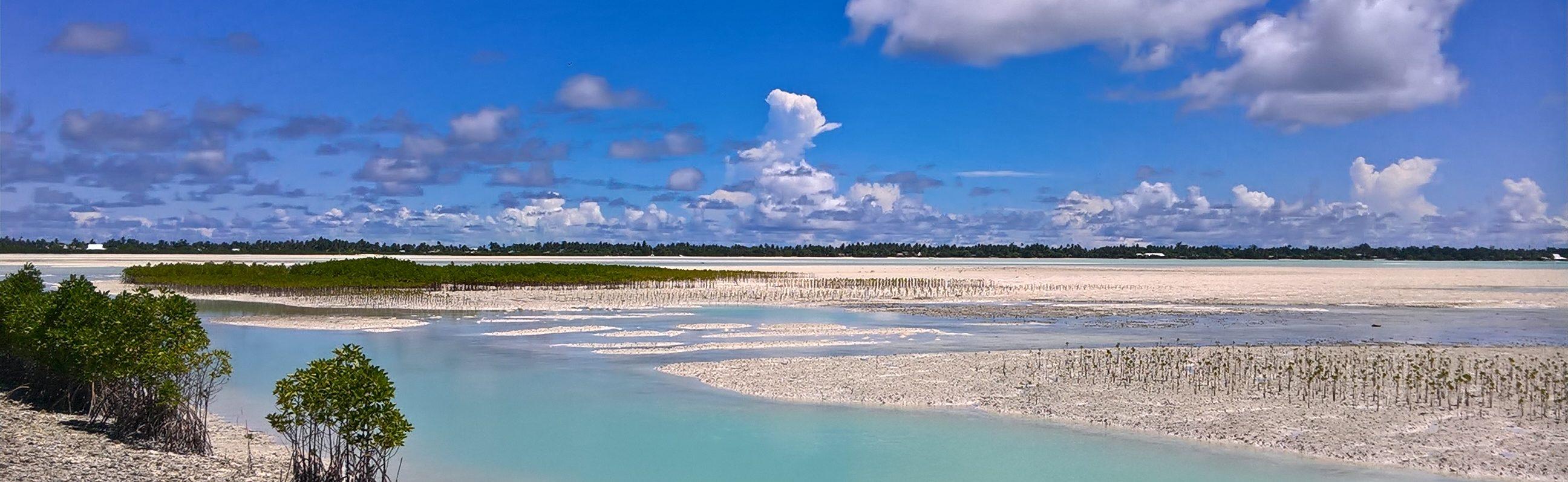 Kiribati landscape mangroves
